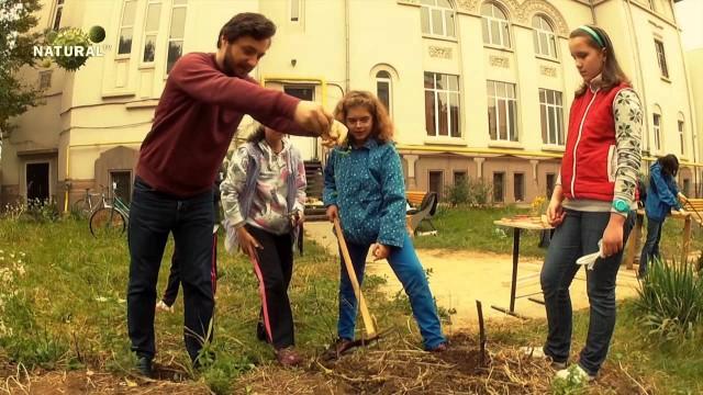 Gradina din curtea școlii – lucrările de toamnă