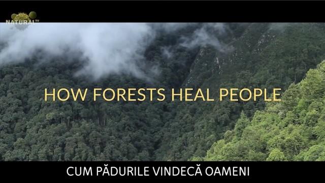 Cum pădurile vindecă oameni