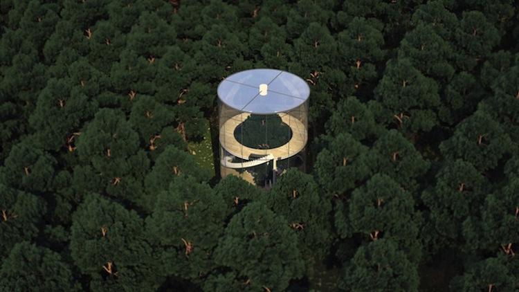 9-a-masow-design-studio-tree-in-the-house-3